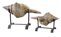 19556 Uttermost Conch Shell Sculpture, Set/2